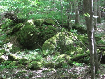 Wood with large rocks and moss