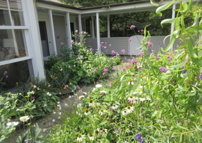 Perennial wildflower garden in Chatham, NY, designed by Wendy P. Carroll