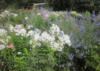 Perennial wildflower meadow designed by Wendy P. Carroll