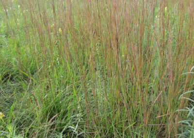Ornamental grasses give height to the design and provide shelter for insects and other small animals