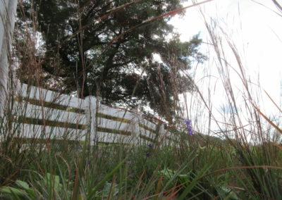 Natural meadow with fence boundary, designed by Landscape Architect Wendy P. Carroll